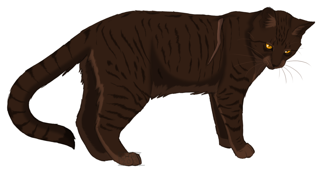 Png version of warrior cats. Image bramblestar tc by