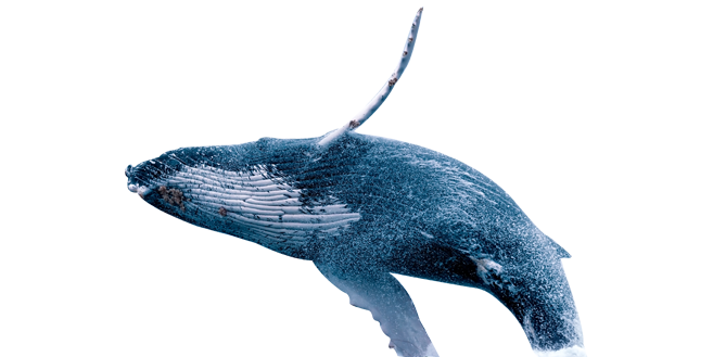 transparent welcome whale