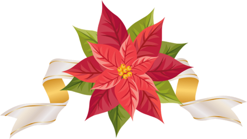 Poinsettia with ribbon png. Poinsetta clip svg transparent library