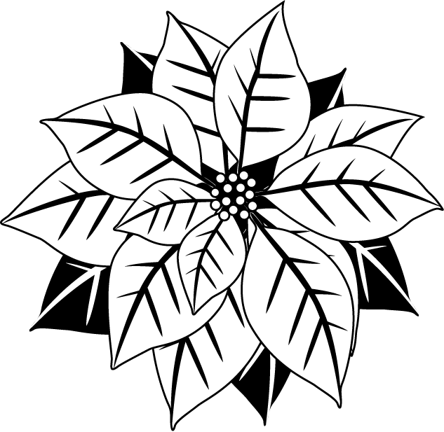 Poinsettia clip black and white. Collection of christmas