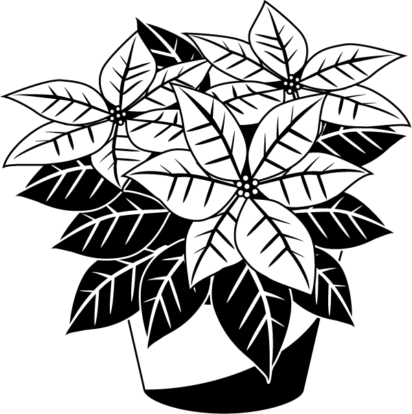 Poinsetta clip black and white. Collection of christmas