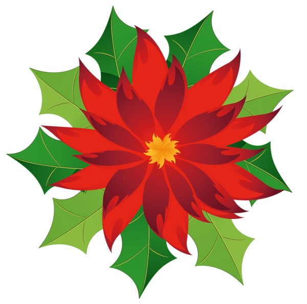 Poinsettia clip leaf. Christmas holly poinsetta terrieasterly