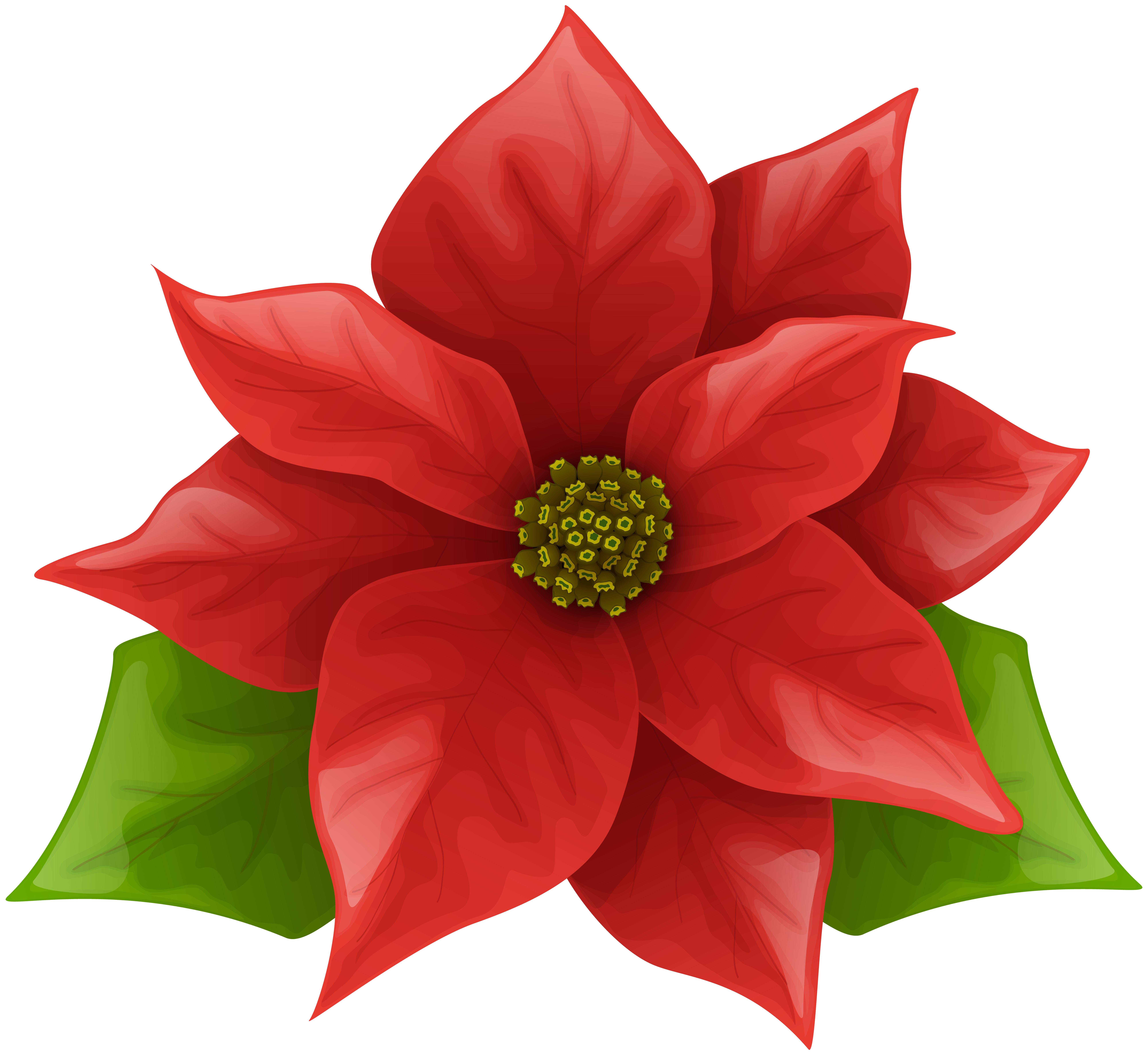 Poinsettia clipart. Christmas png clip art