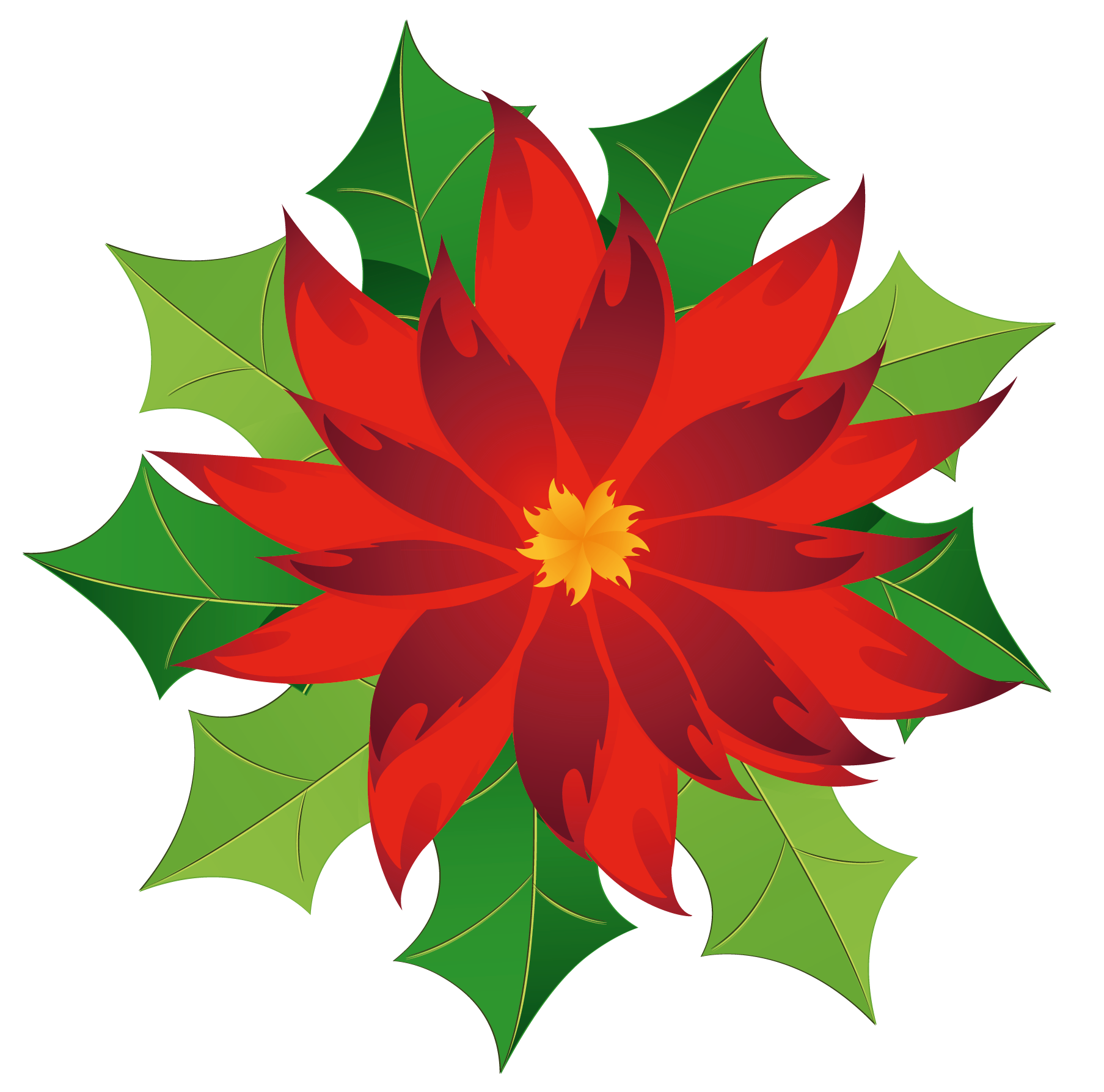 poinsettia clipart kid
