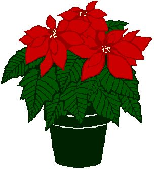 Poinsettias clipart manglik. Poinsettia drawing outline at