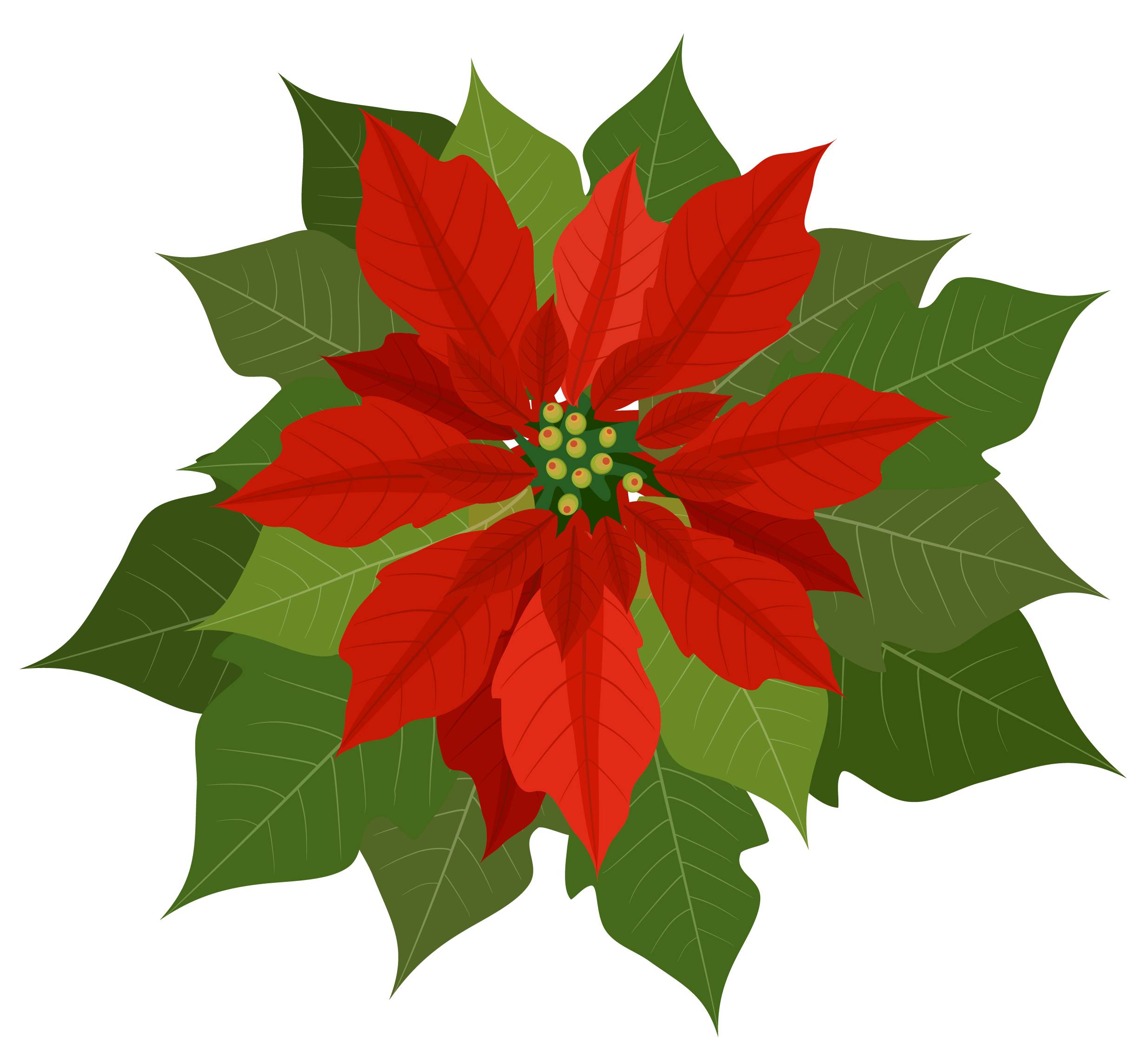 Poinsettia clipart transparent background. Christmas png gallery yopriceville