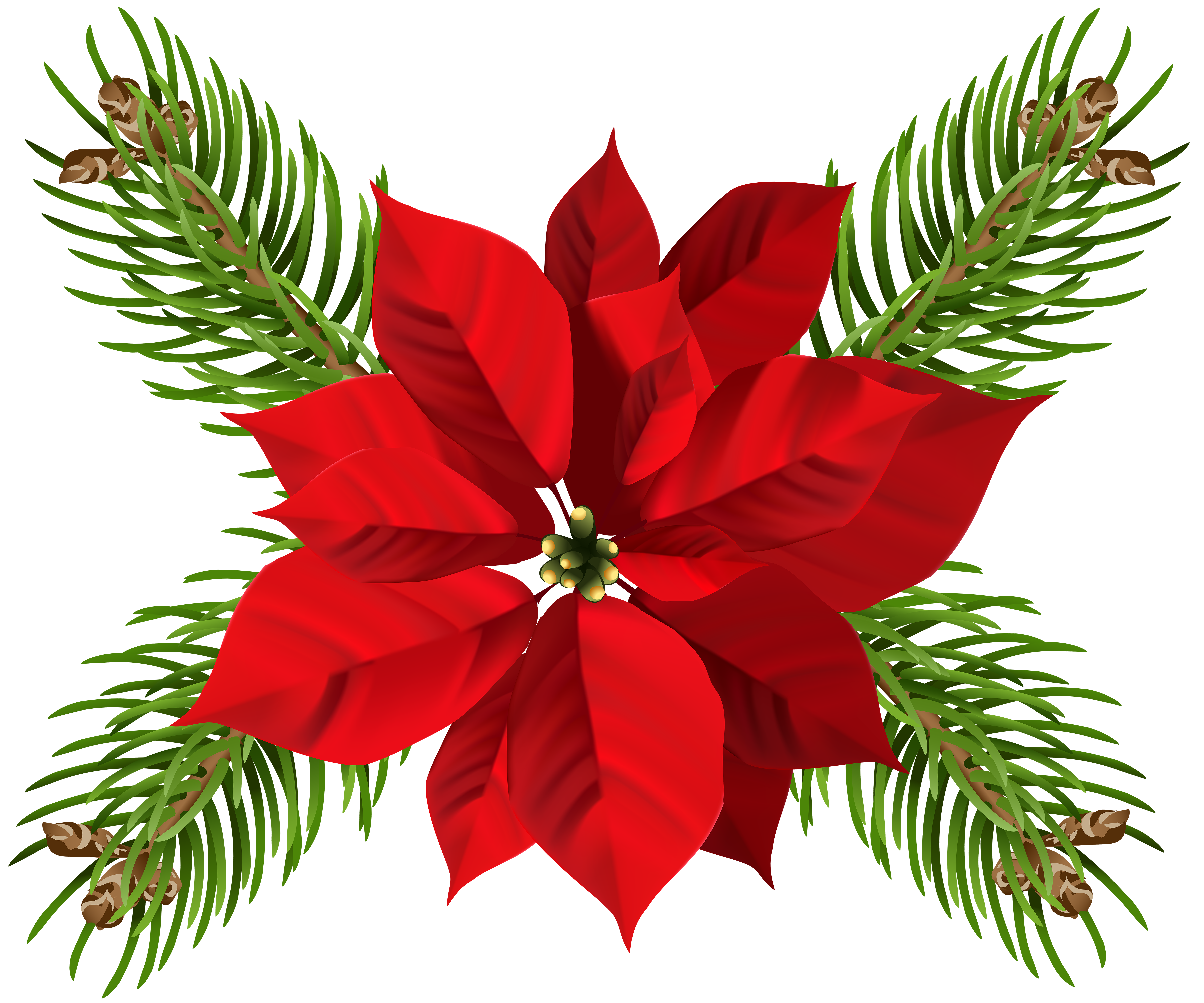 Poinsettia clipart transparent background. At getdrawings com free