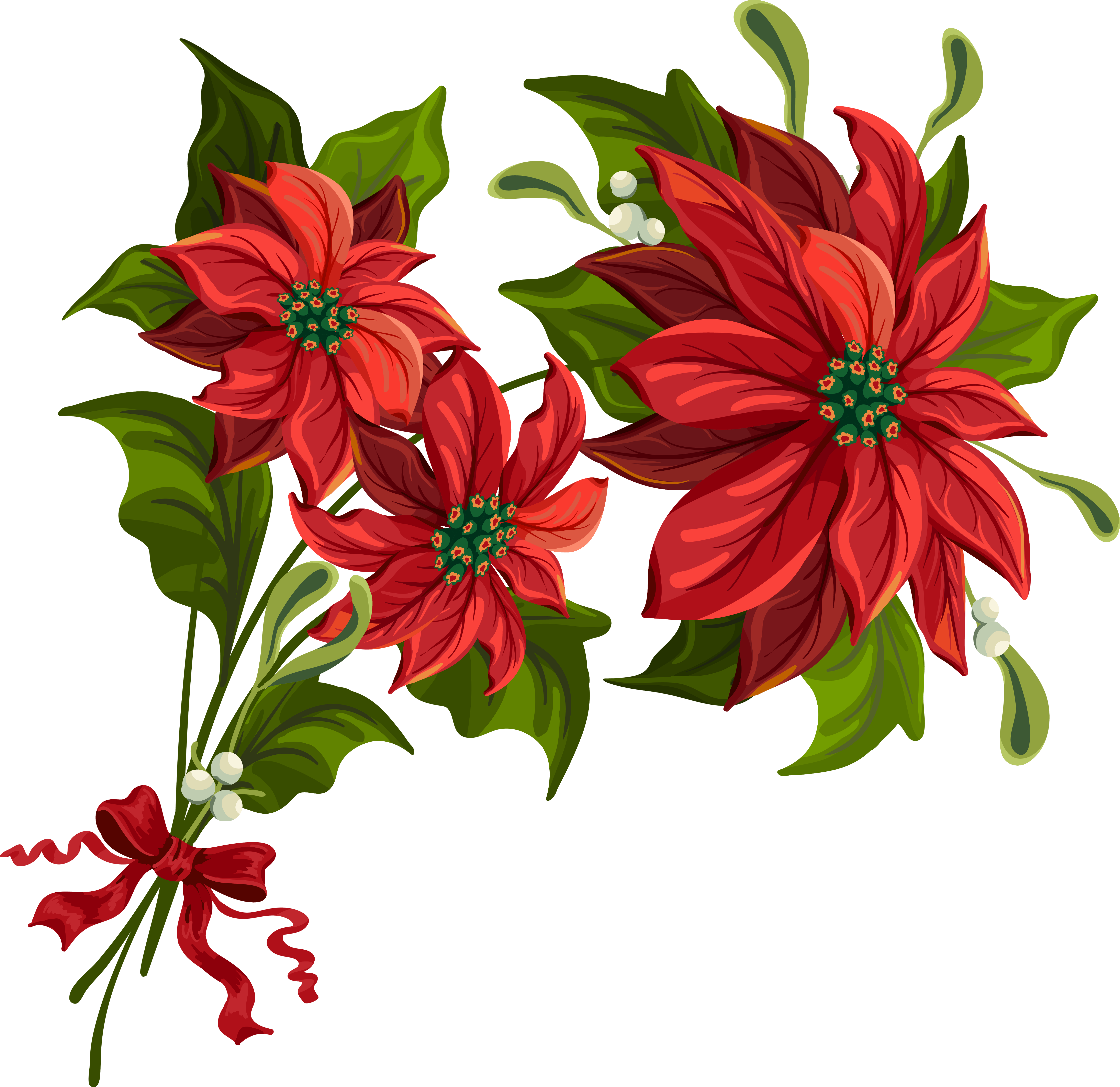 Poinsettia transparent background. Christmas png clipart gallery graphic free library