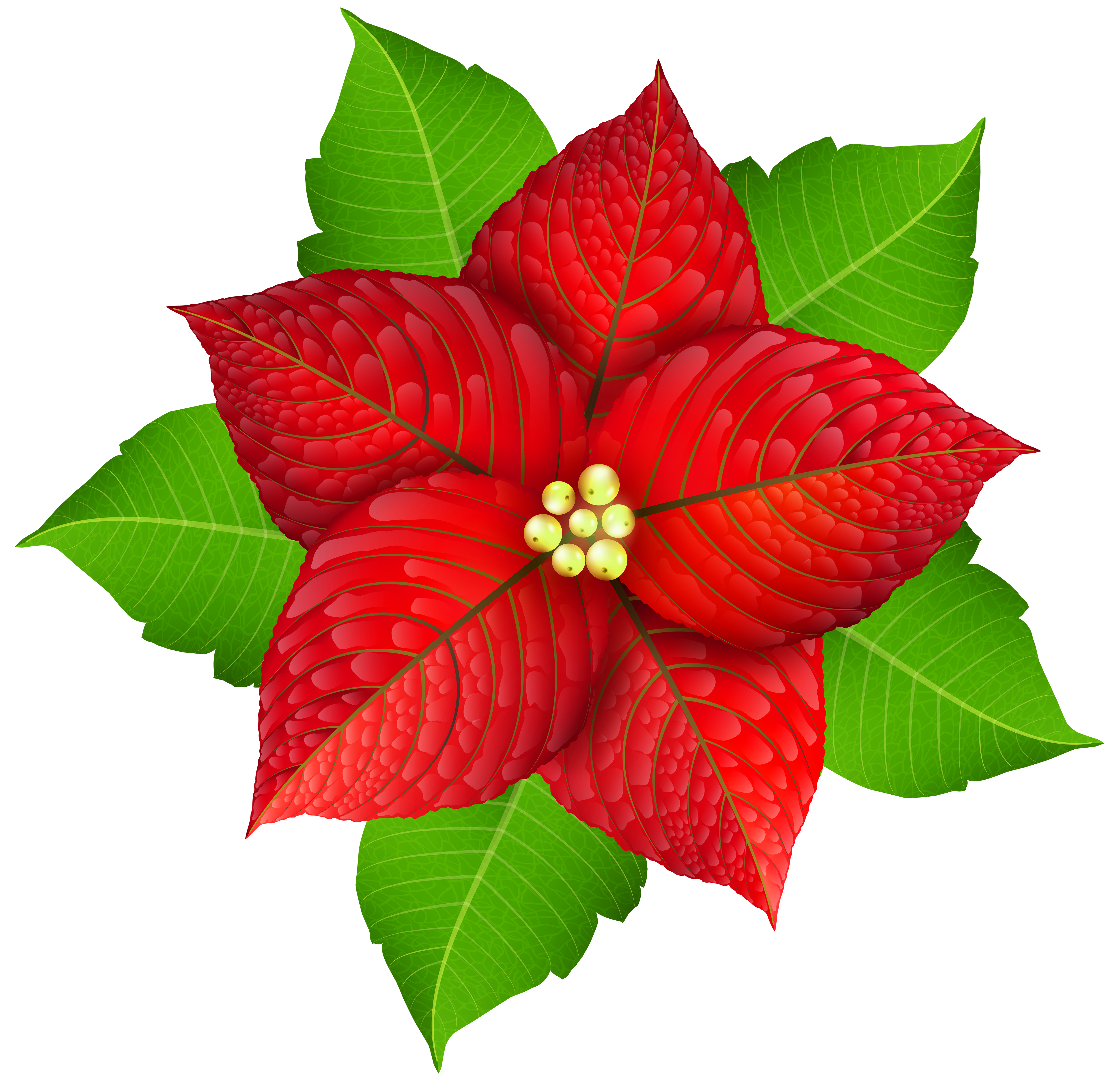 Poinsettia clipart transparent background. Christmas png image gallery
