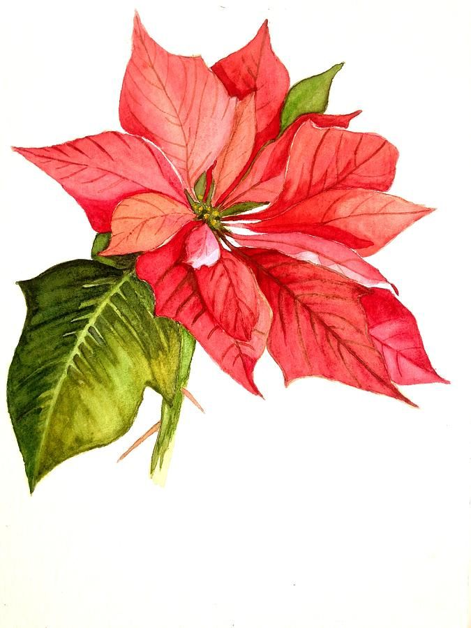 Poinsettia clipart yuletide. Best anything images
