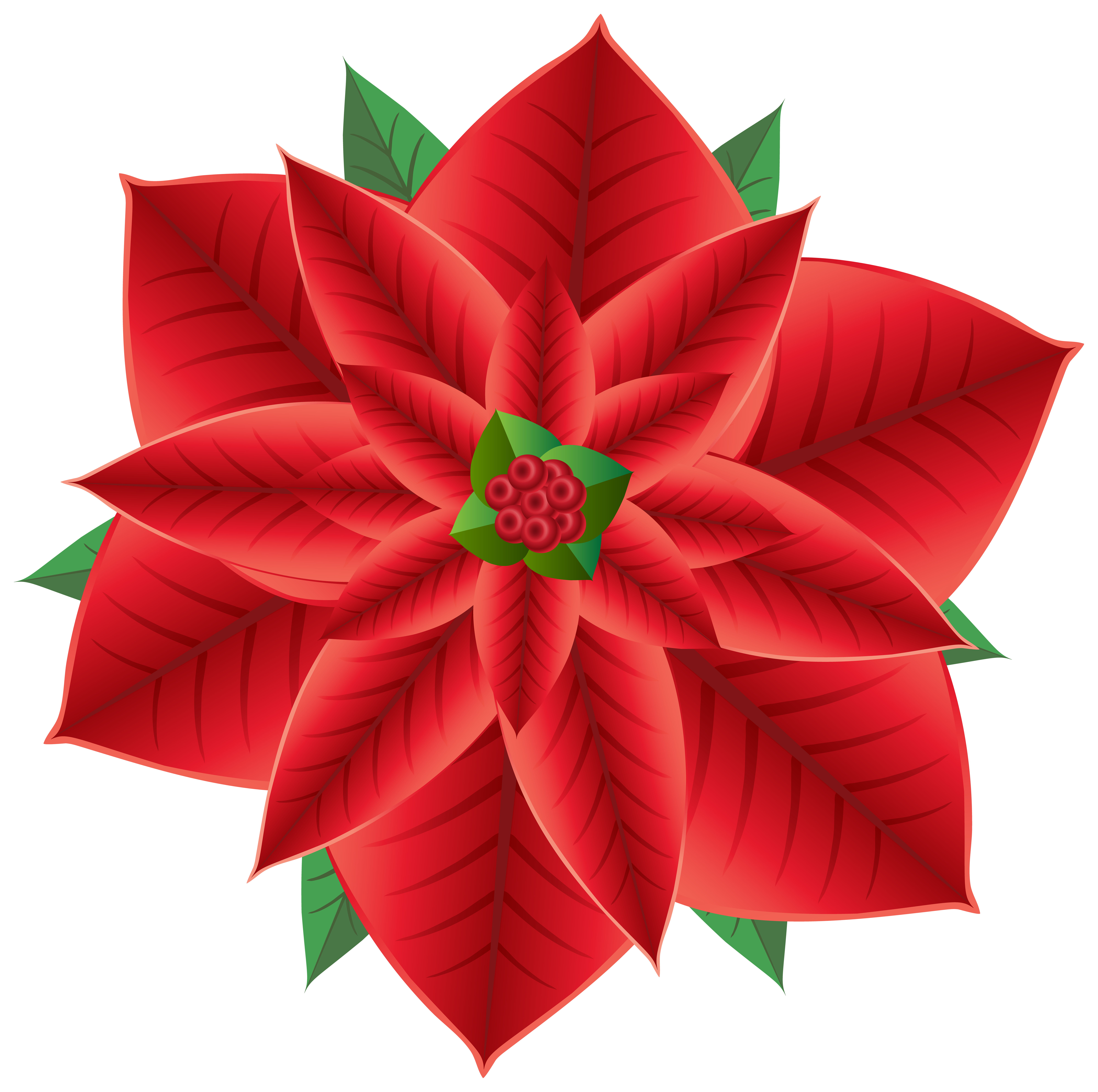 Christmas png clip art. Poinsettia transparent jpg library library