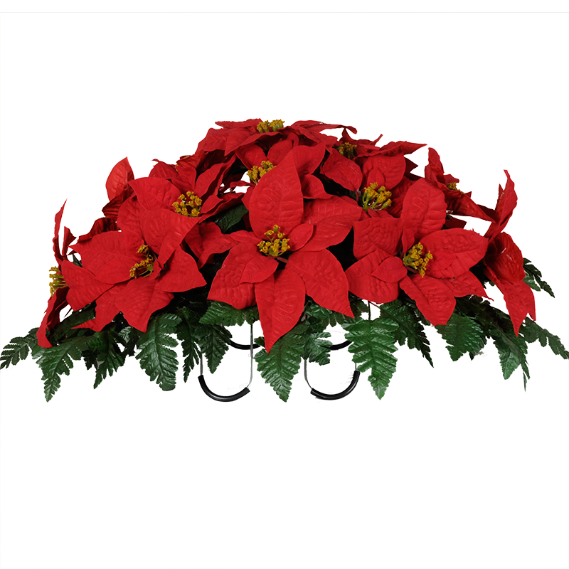 Poinsettia transparent red. Softly and tenderly
