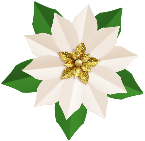 Christmas white poinsettia png. Poinsetta clip clip art royalty free stock