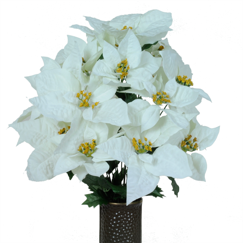 Poinsettia transparent white. Softly and tenderly