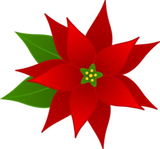Poinsettias clipart animated. Christmas poinsettia at getdrawings
