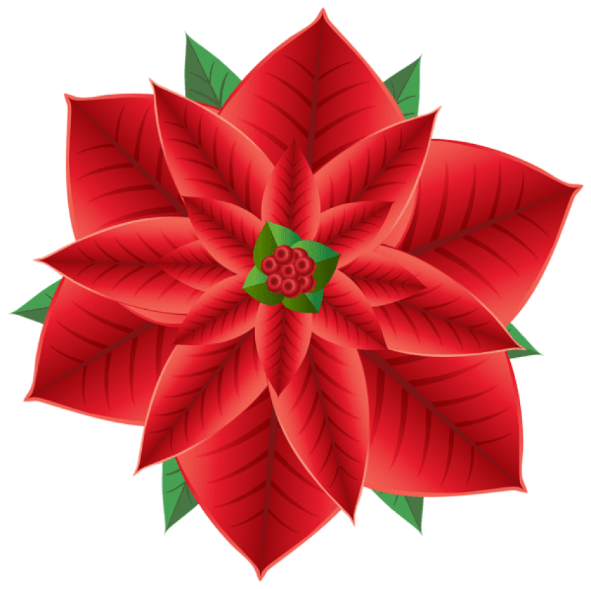 Poinsettia transparent beautiful. Christmas png free images