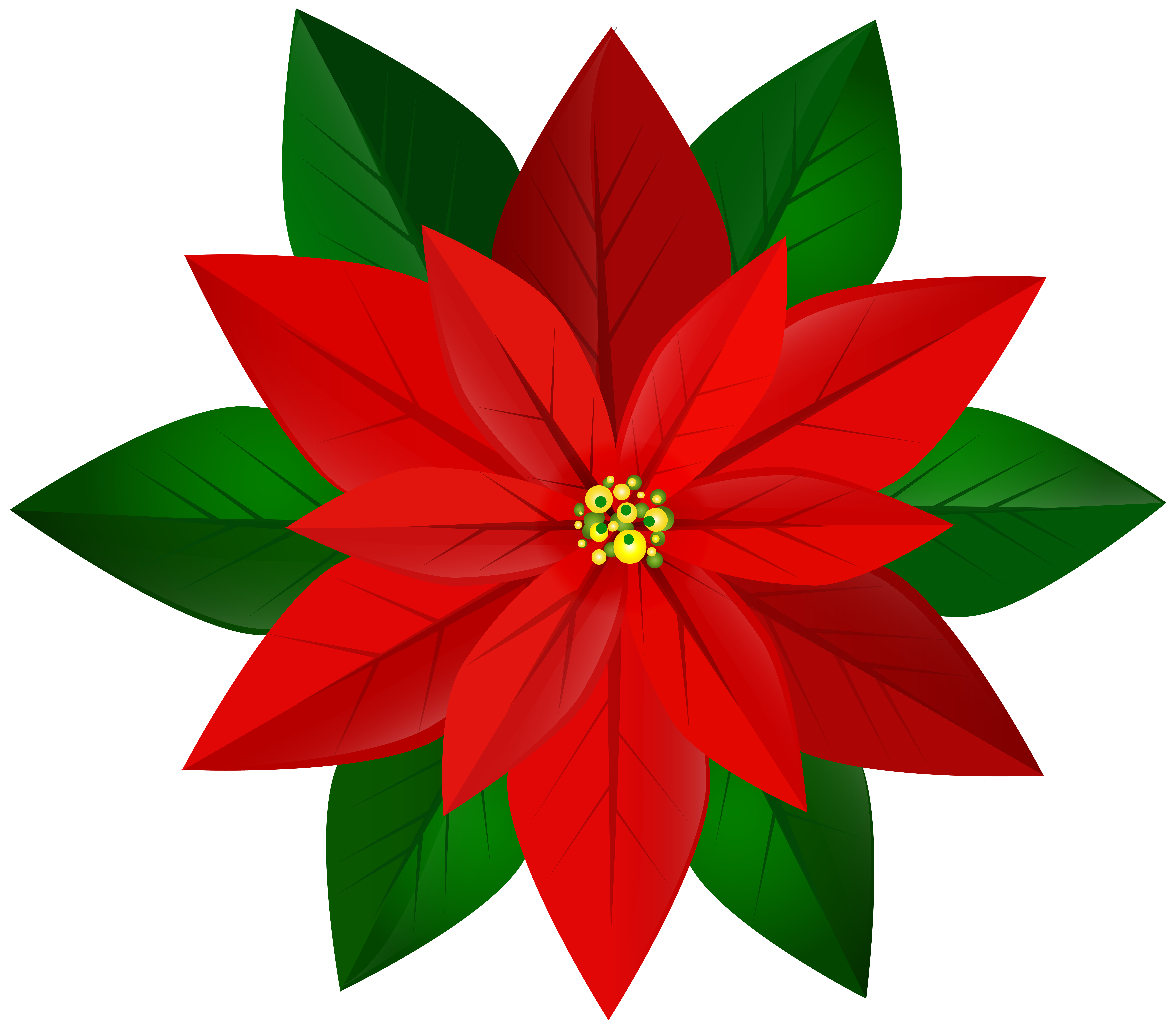 Poinsettia transparent red. Christmas png clip art