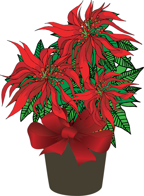 Poinsetta clip ivory. Free poinsettias cliparts download