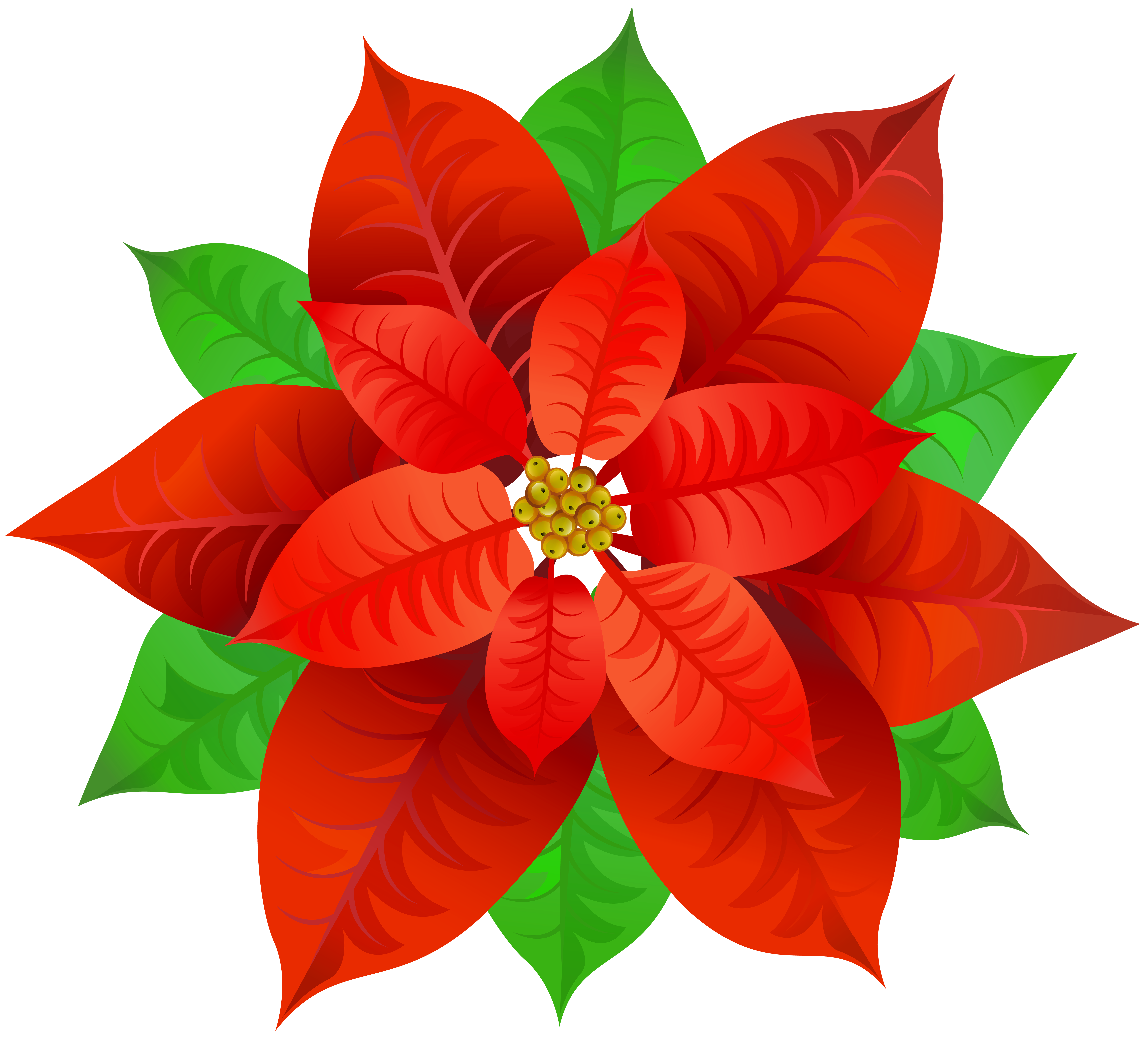Poinsettia transparent. Png image gallery yopriceville vector