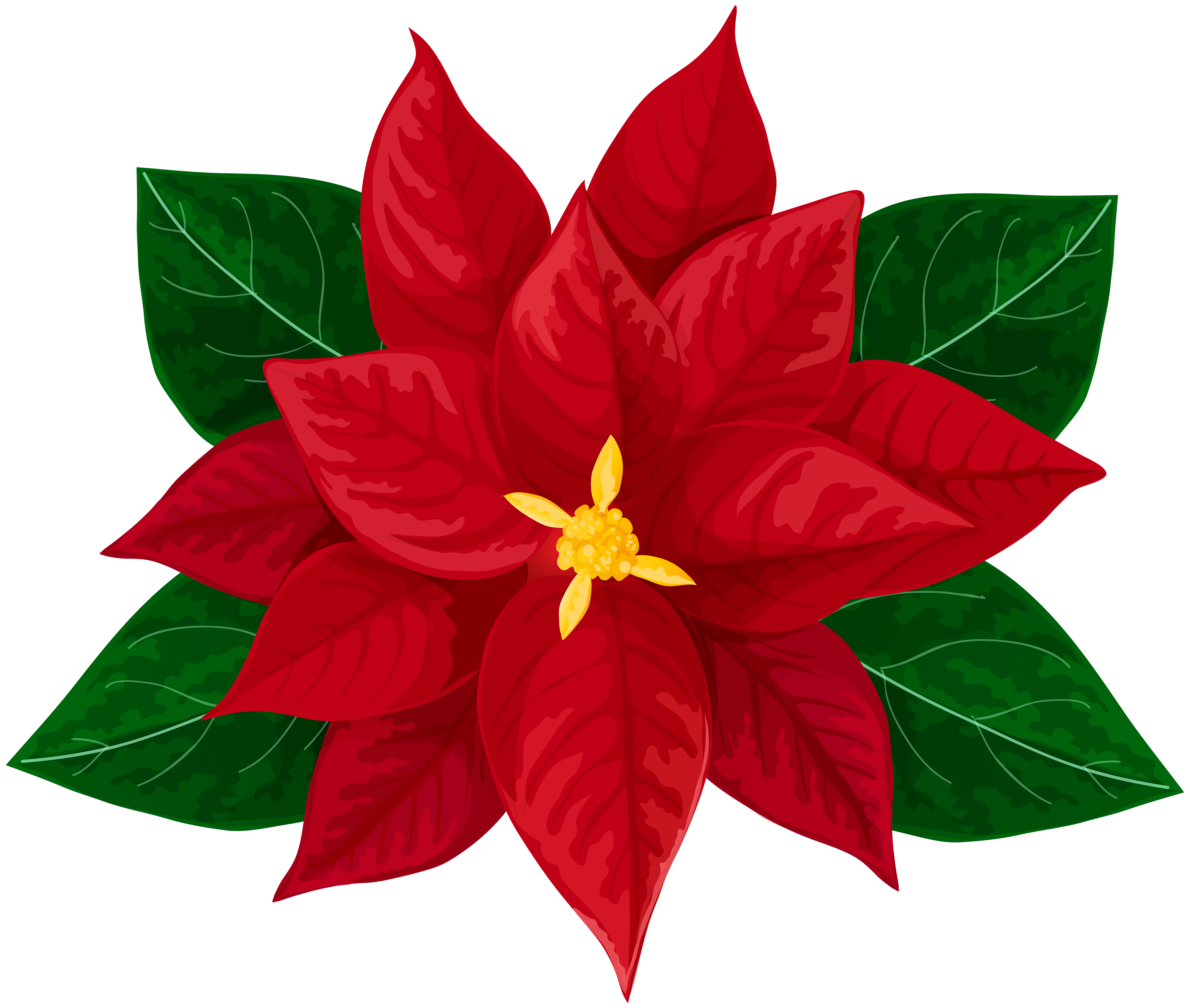 Poinsettia transparent red. Clip art image gallery