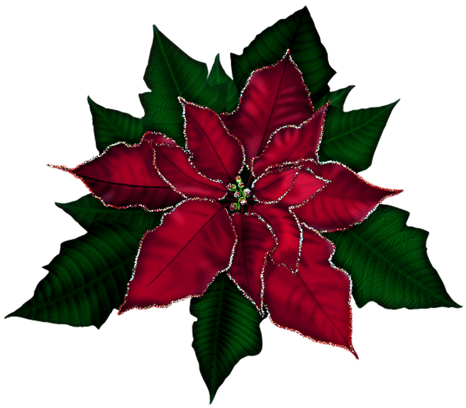 Poinsettias clipart red poinsettia. Free clip art cliparts