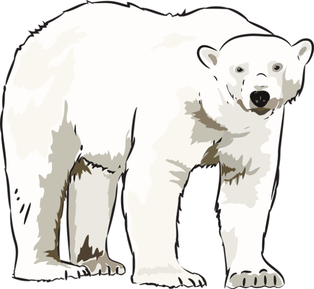 Polar bear clipart png. Art kid clipartix