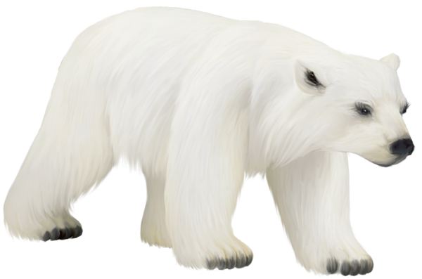 Polar bear clipart png. Large painted you re