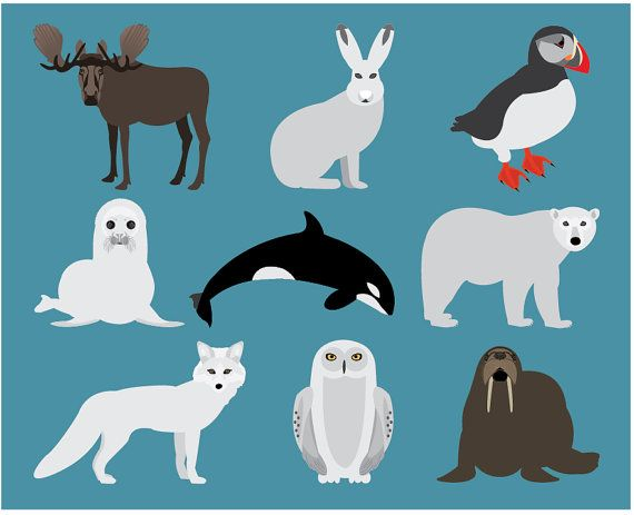 seal clipart animal antarctica