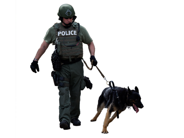 Police dog png. Retired attacks drags man