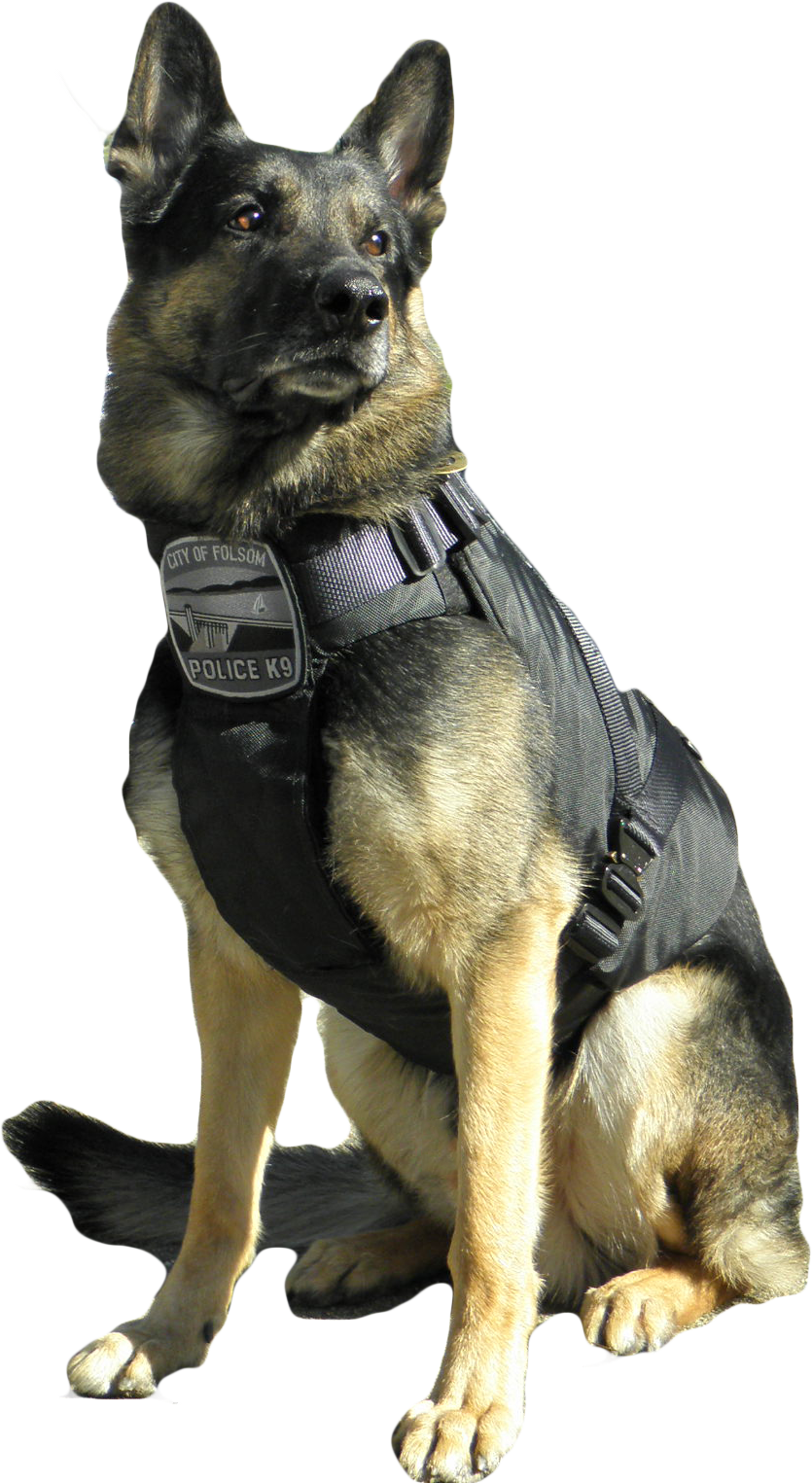 Police dog png. Hounds on working leashes