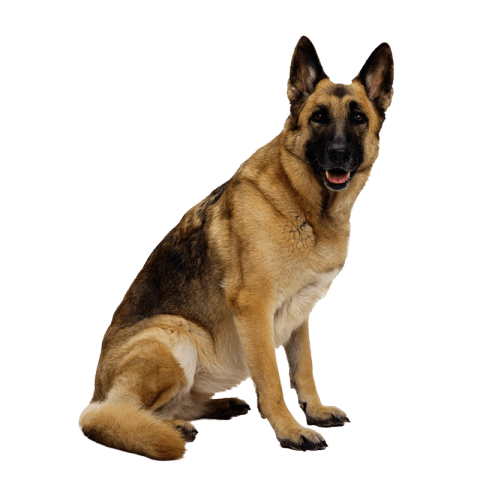 Police dog png. Free images toppng transparent