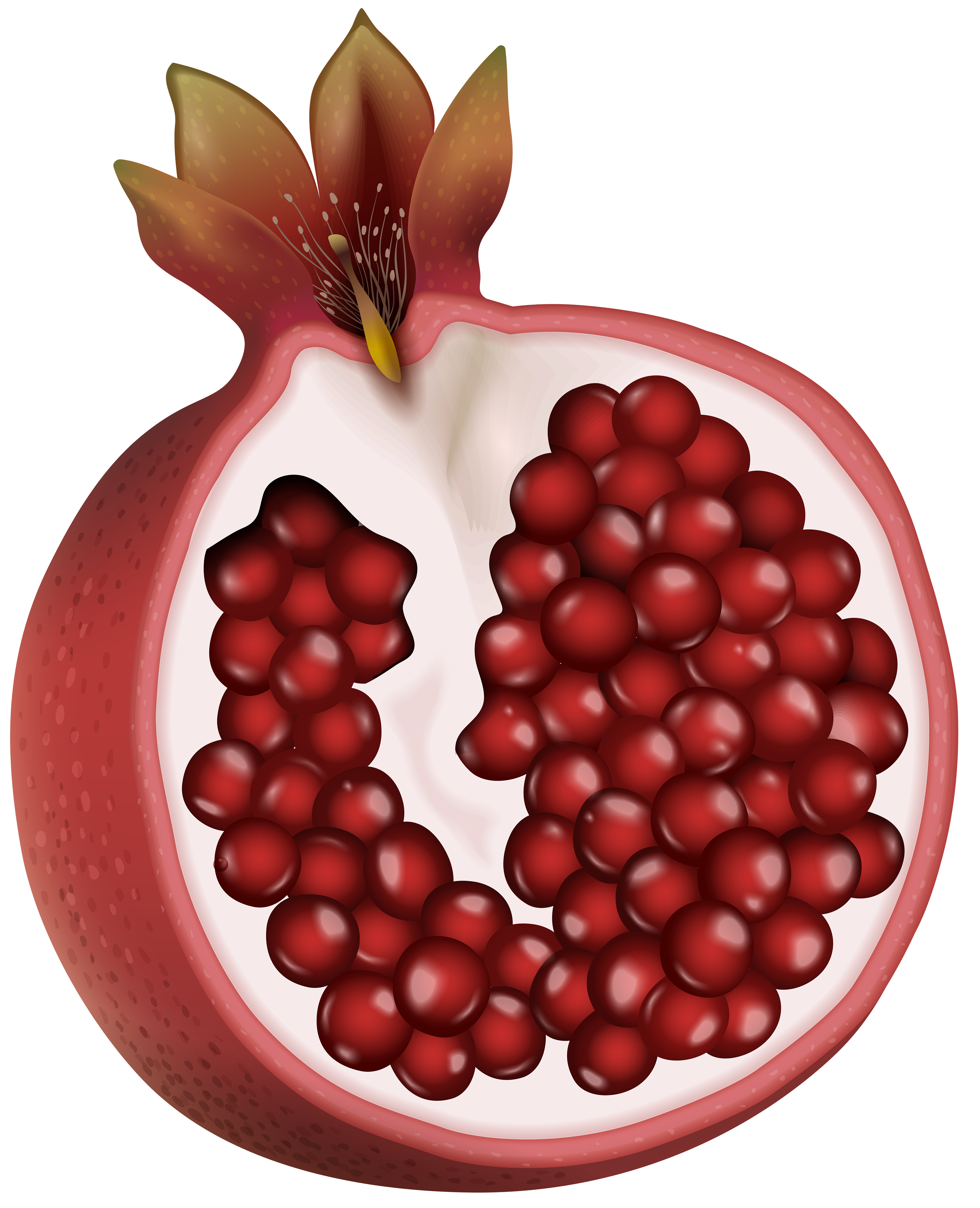 Pomegranate clipart pomegranite. Red png clip art