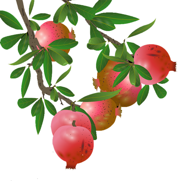 Pomegranate tree png. Lingonberry apple transprent download