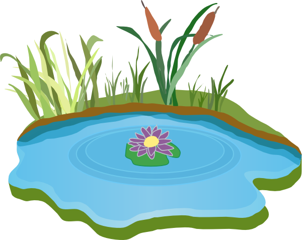 pond clipart pond plant