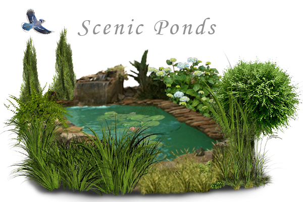 Pond transparent grass. Water features ponds insignia