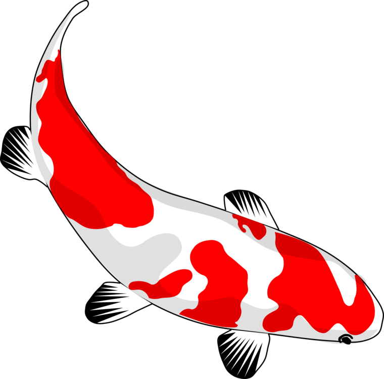 Pond transparent fish clipart. Koi drawing carp free