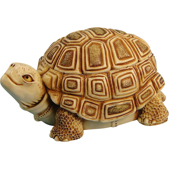 Tortoise vector shark. Box turtle transparent background
