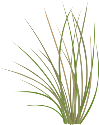Vector wheat wheet. Index of ress tice