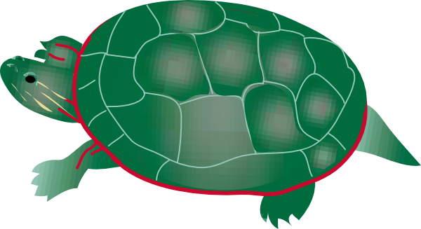 Tortoise vector green. Pond clipart free download