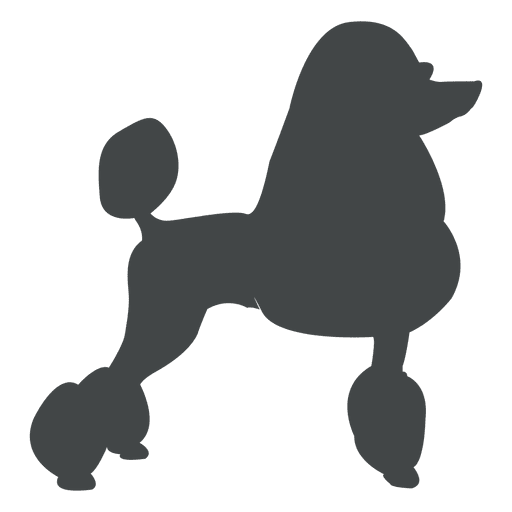 Puppy clip miniature poodle. Black and white