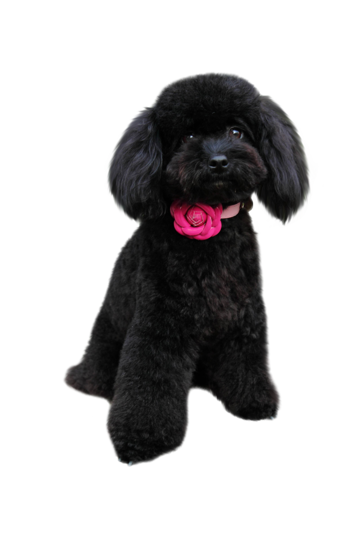 Poodle clip utility. In png dogs pinterest