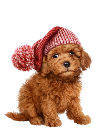 Chien chiot dog dogs. Poodle clipart brown poodle png black and white