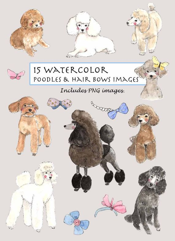 Clip art watercolor poodles. Poodle clipart brown poodle vector royalty free library
