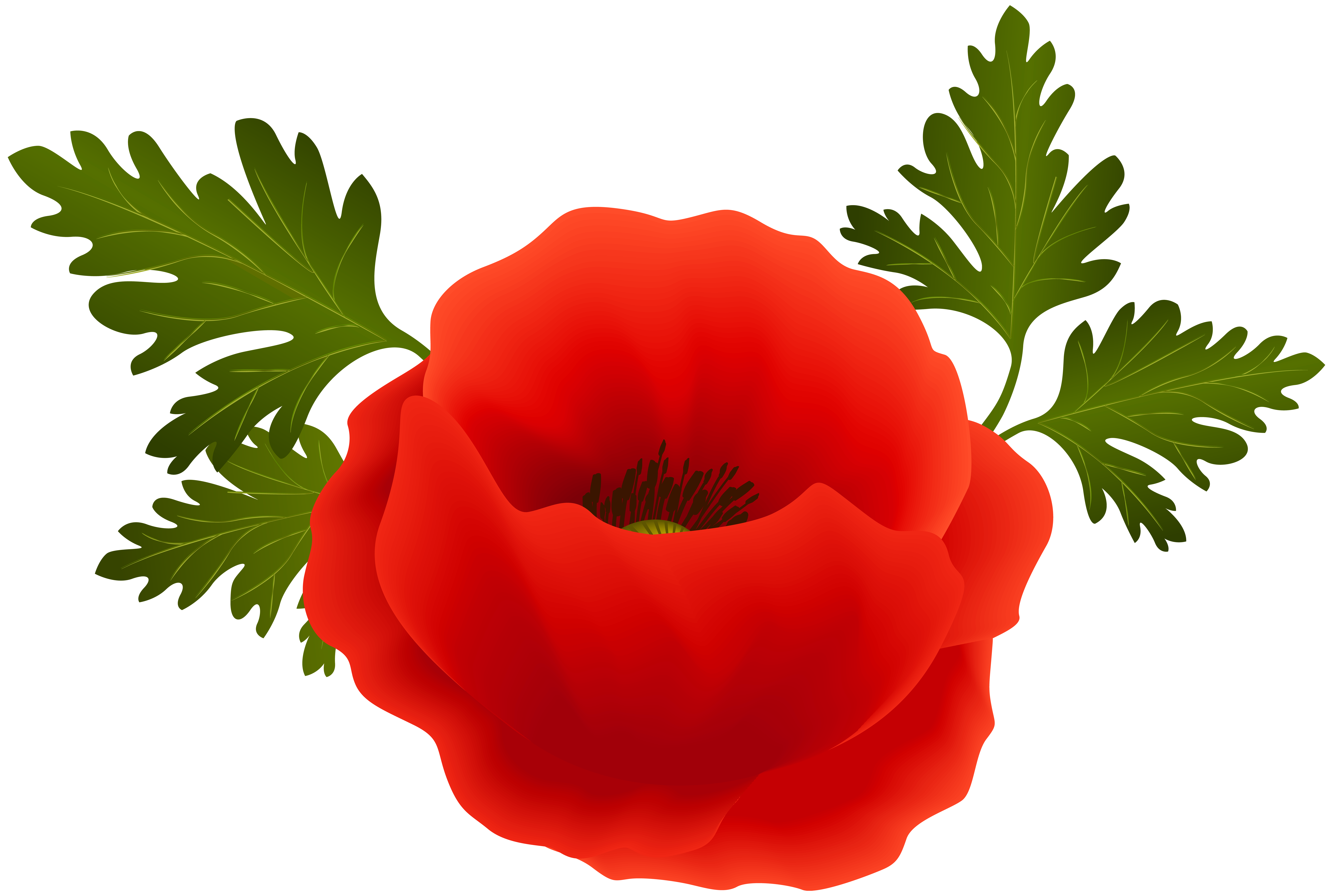 Poppy flower png. Clipart at getdrawings com