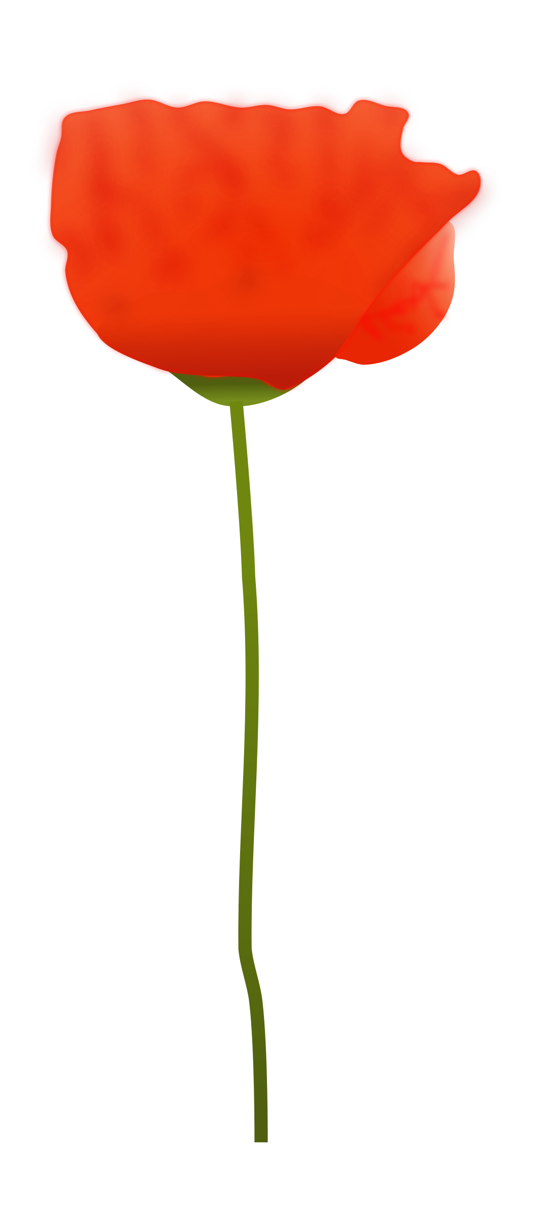 Poppy flower png. Icons free and downloads