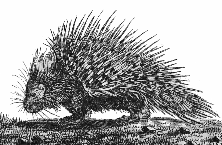 Porcupine clipart drawn. Blueridge wallpapers drawing