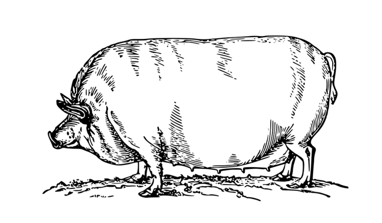 Pasture raised and organic. Pork drawing chicken meat jpg black and white stock
