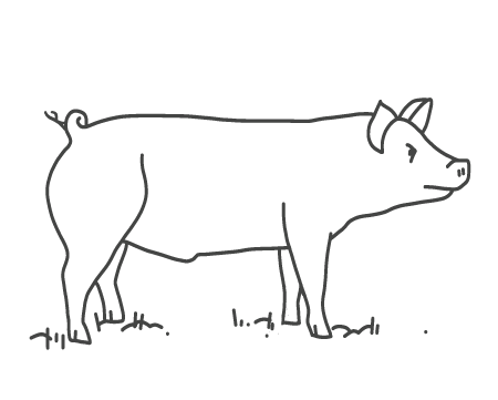 Pork drawing chicken meat. Heritage breed nut fed
