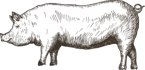Pork drawing pog. Blog back restaurant pigdrawingpng