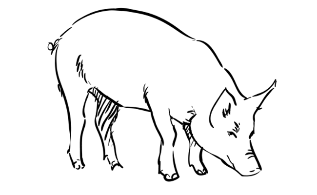 Pork drawing realistic. How to draw a